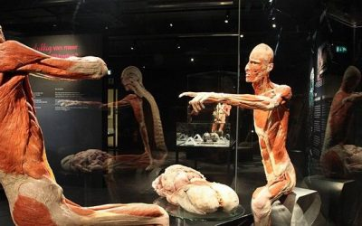 Body Worlds Must-see Exhibition in Amsterdam