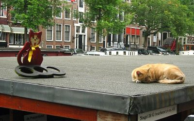 Cat Boat Amsterdam Canal Houseboat for Stray Cats